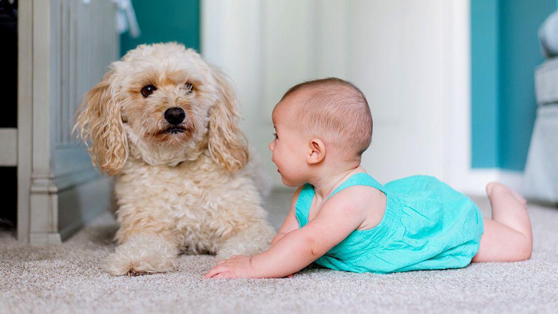 crecer con un perro