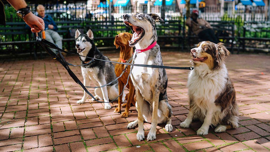 entrenador de perros