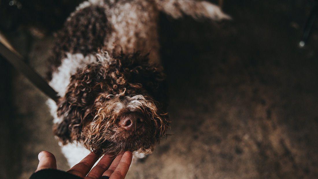 dueño acariciando a su perro