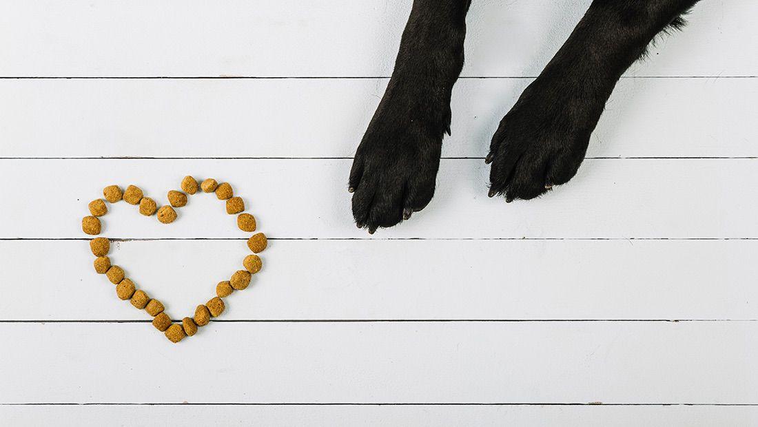 patitas de perro