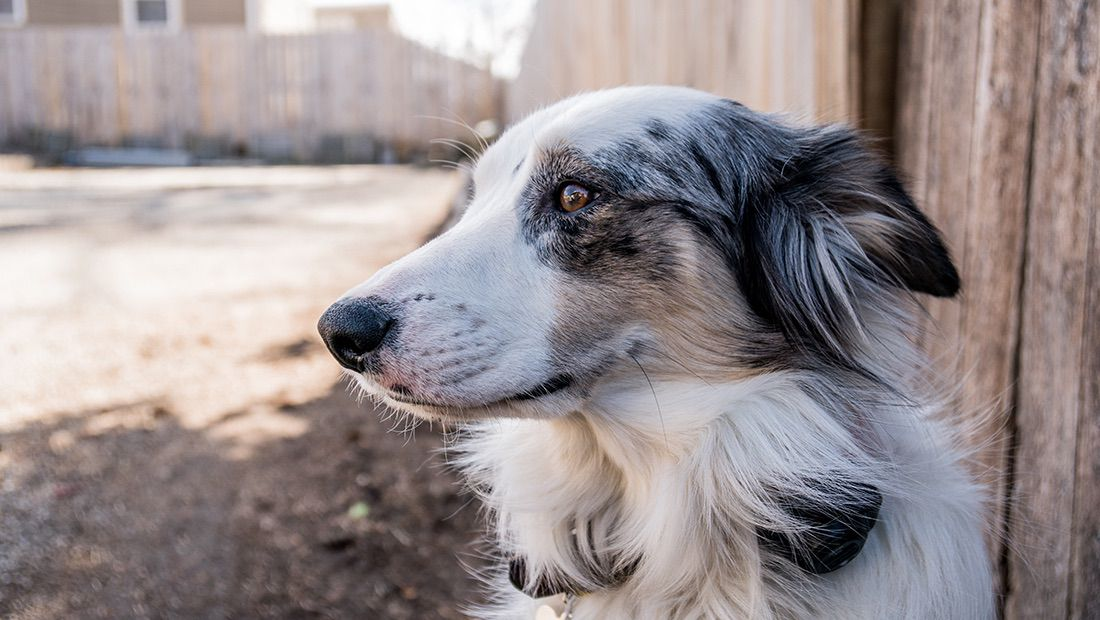 comedores comunitarios para perros
