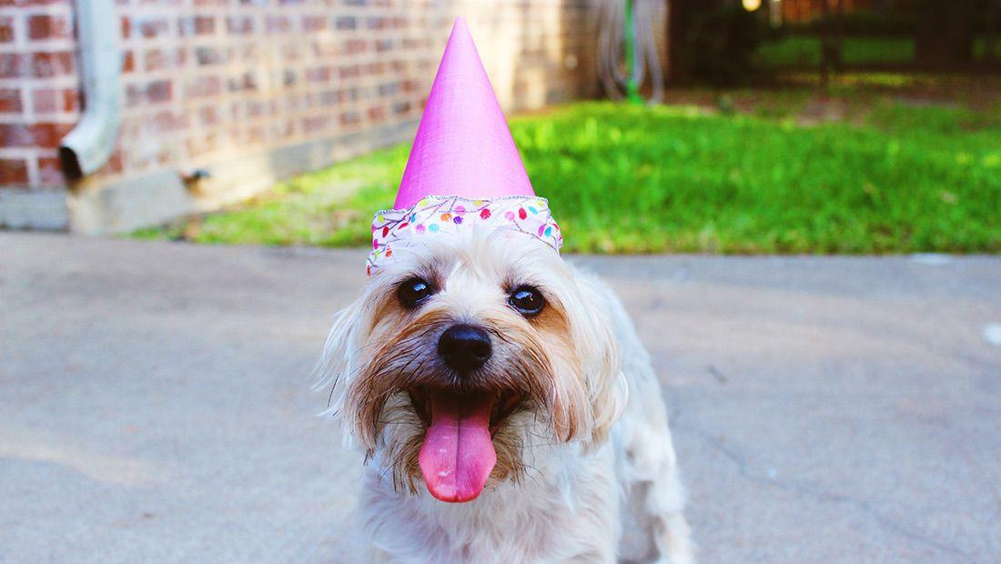 perro con gorro de cumpleaños