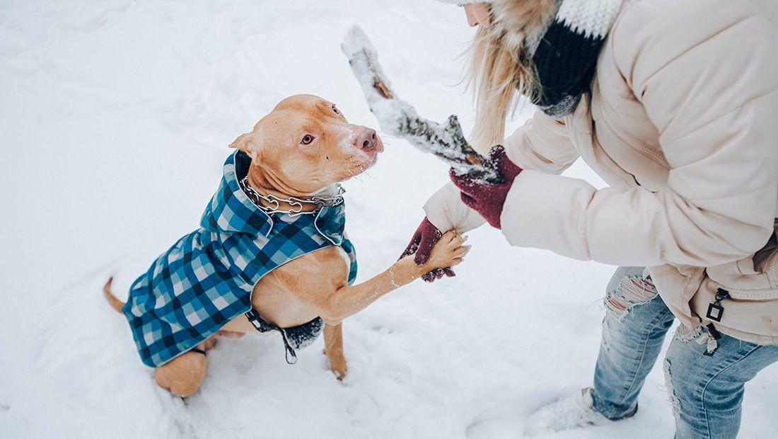cuidados caninos