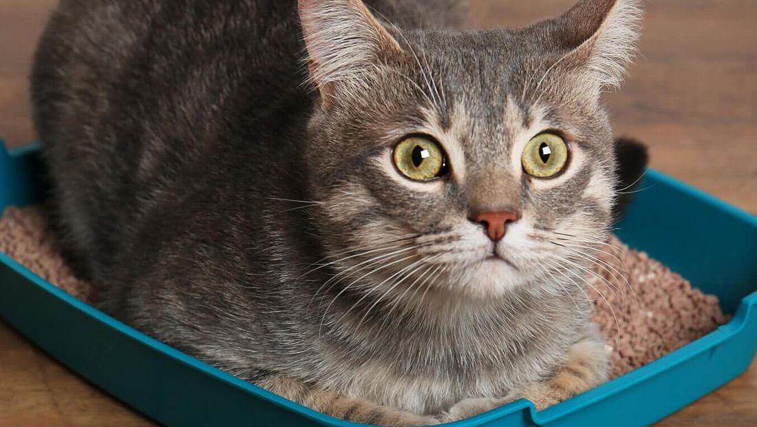 arenero de gato