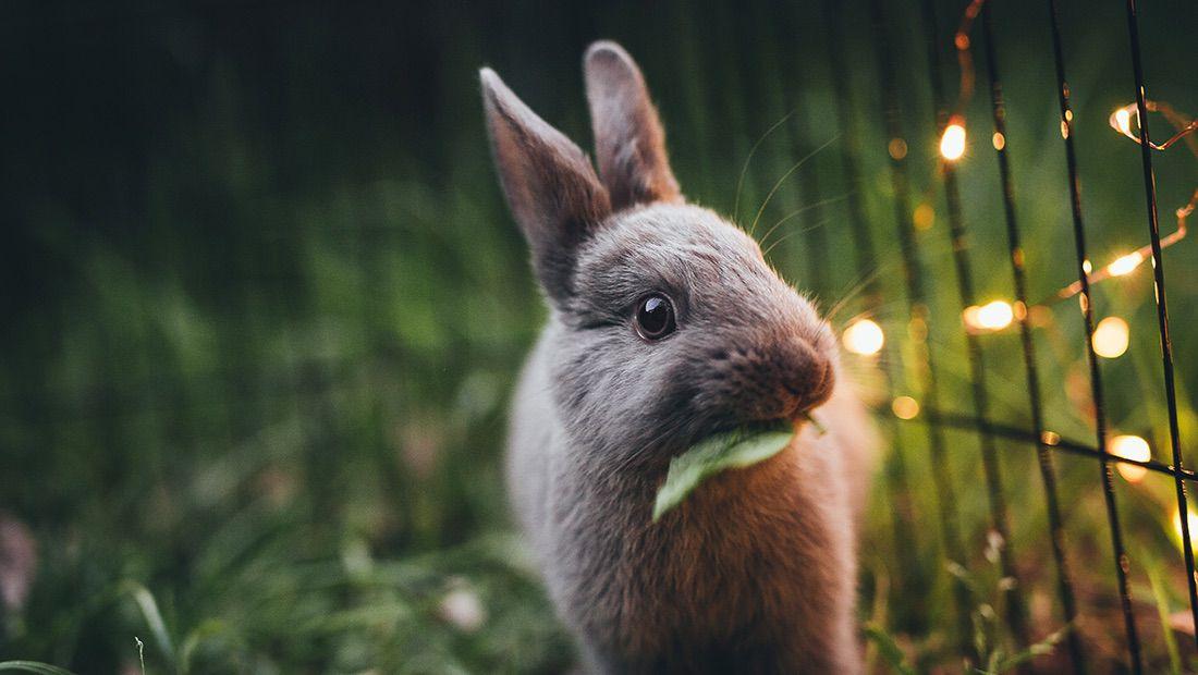 conejo en su jaula