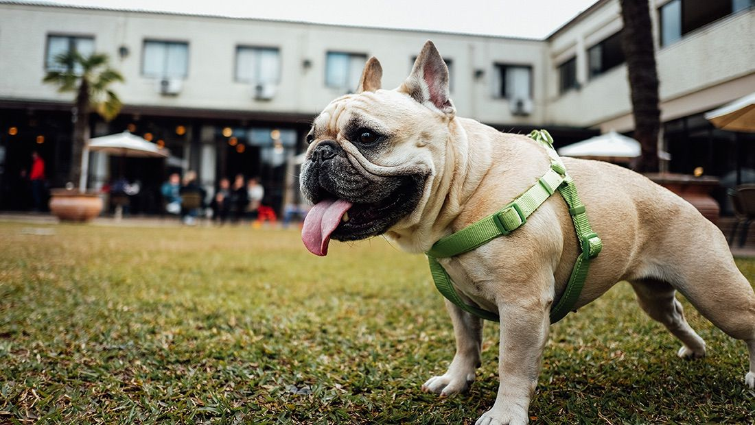 perro paseando en una parque
