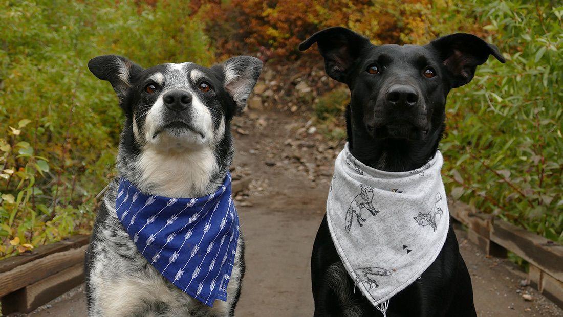 dos perros mirando a su dueño