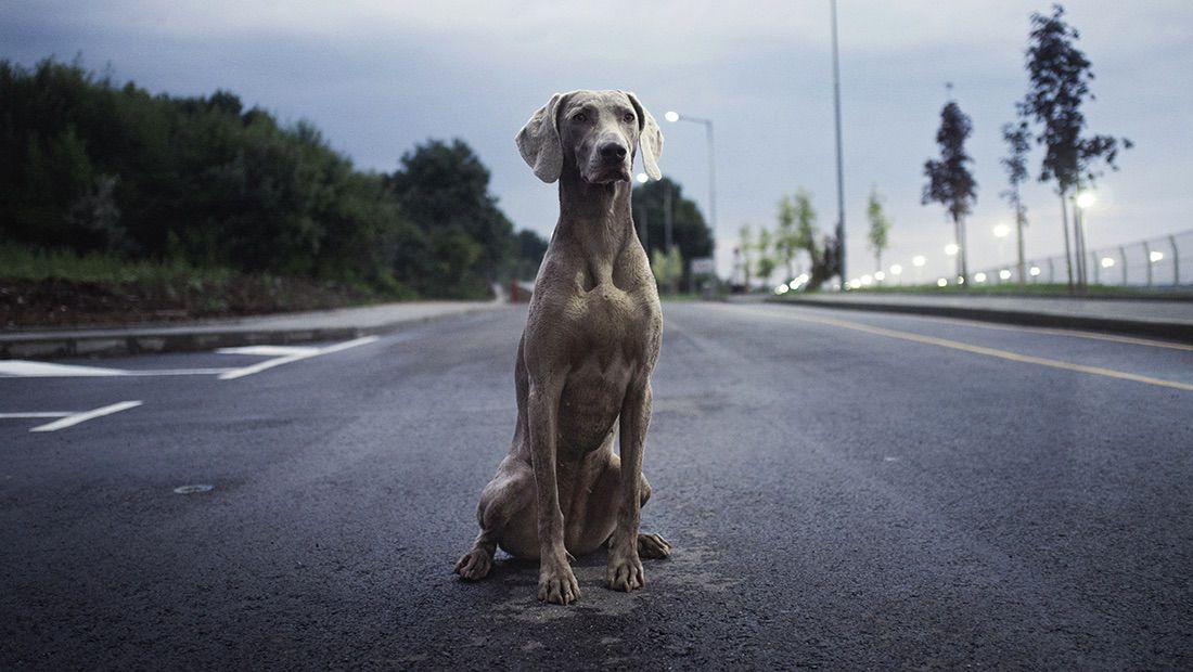 perro solo en carretera