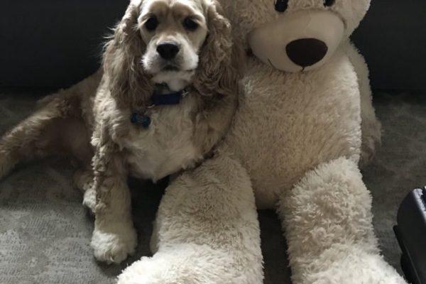 perro con su peluche