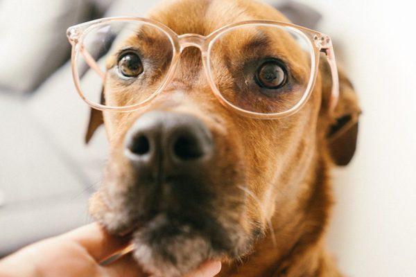 estimulando la mente de nuestro perro