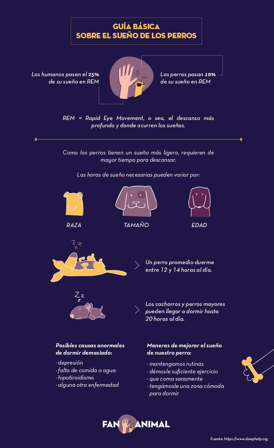 infografía sueño de perros
