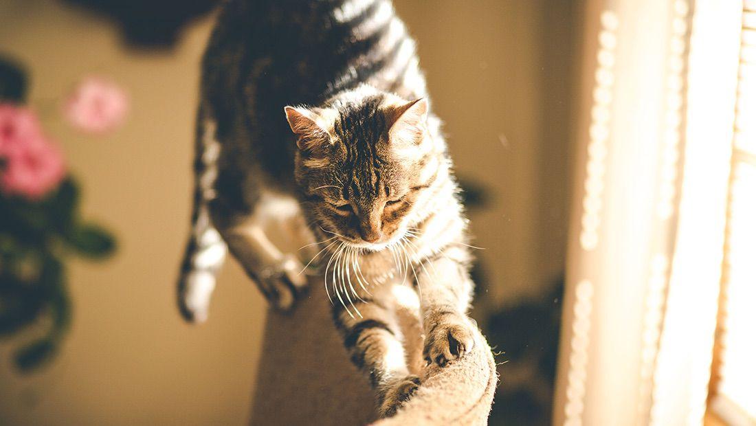ejercitar a nuestro gato