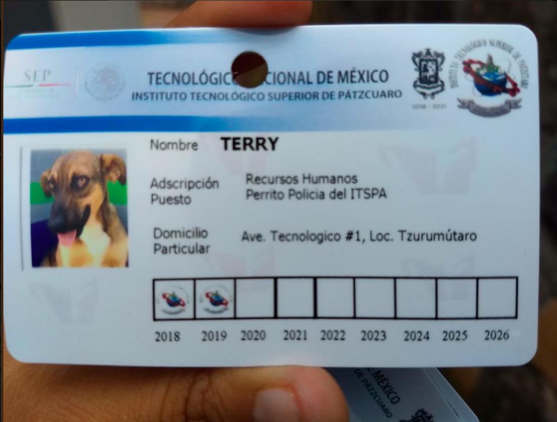 credencial de perro