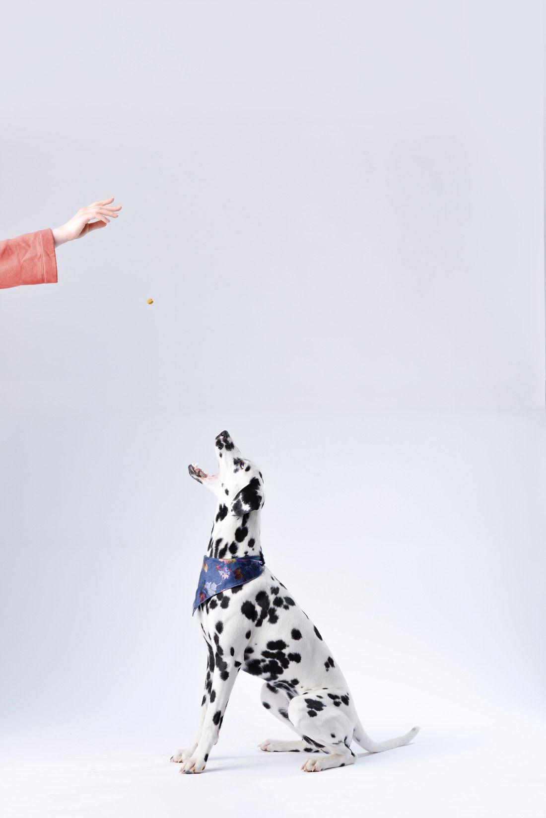 premios para perros