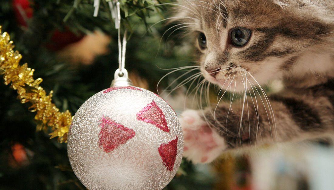 gato con árbol de navidad