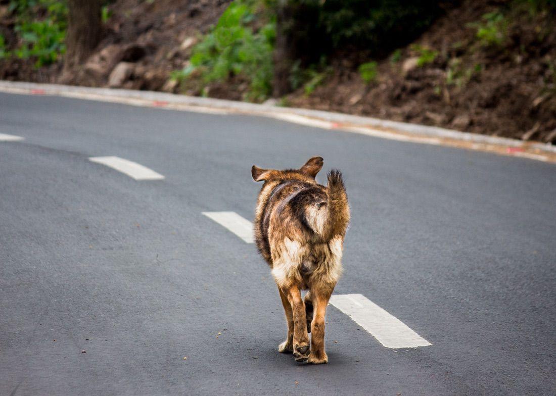 perro en situación de calle