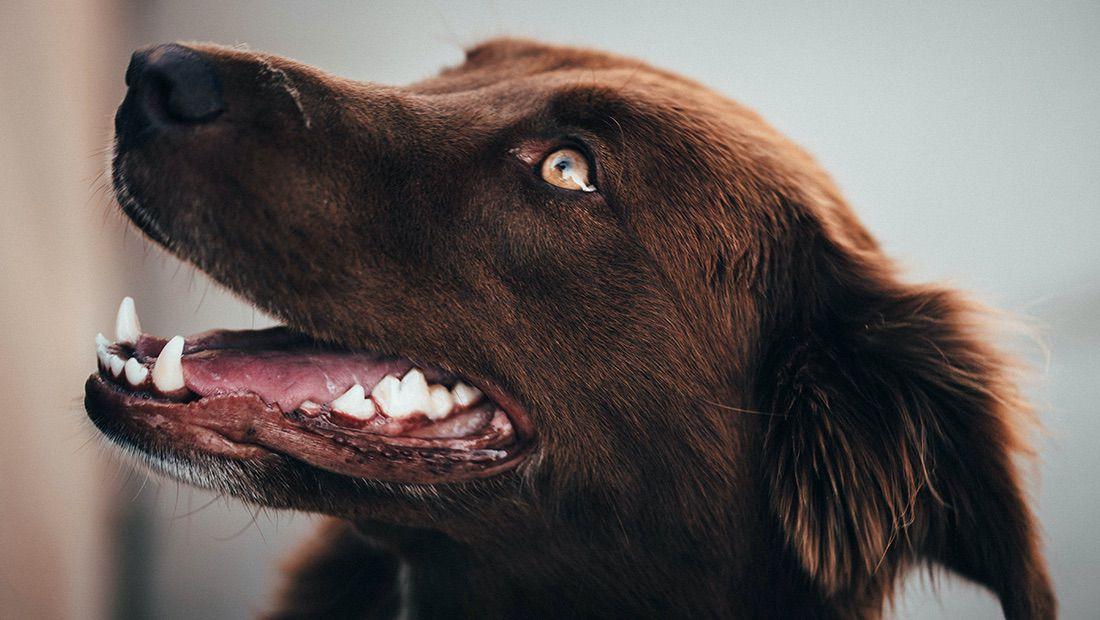 aliento de nuestro perro