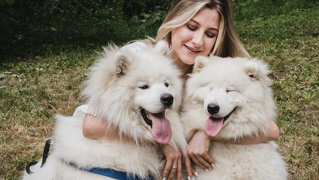 celos de perros