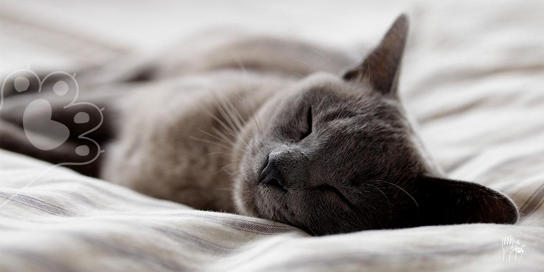 mascotas sueñan