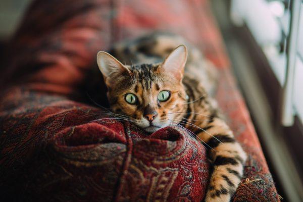 Gato en sillón