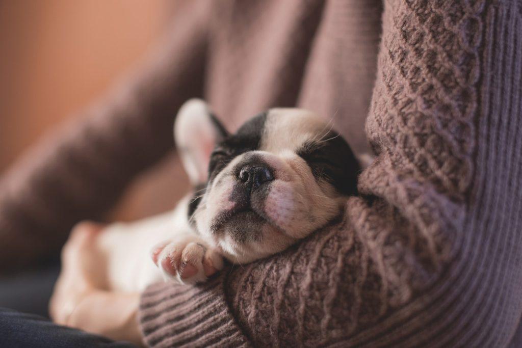 Perro durmiendo en brazos