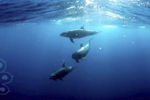 5 Animales marinos impresionantes