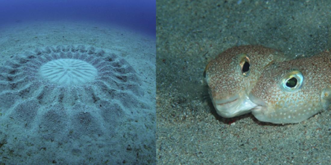 5 Animales marinos impresionantes fabricantes fe círculos