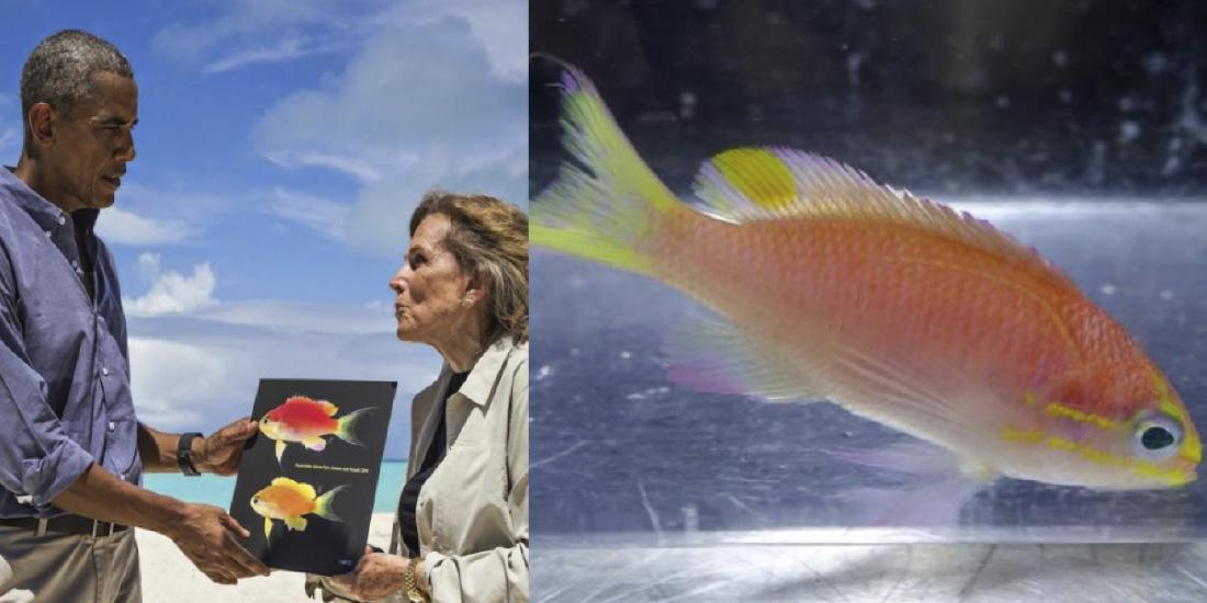 5 Animales marinos impresionantes Pez Obama