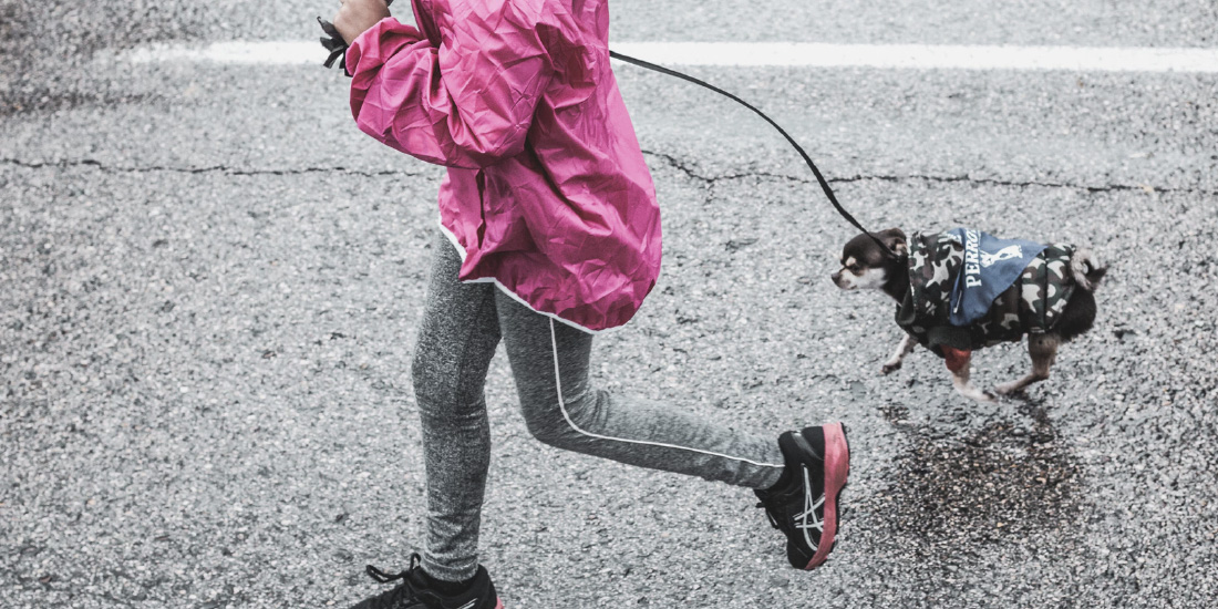 Carrera para ayudar a perros en adopción