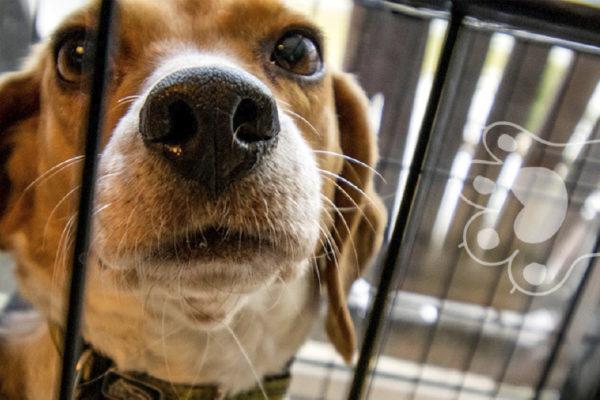 denunciar venta de animales