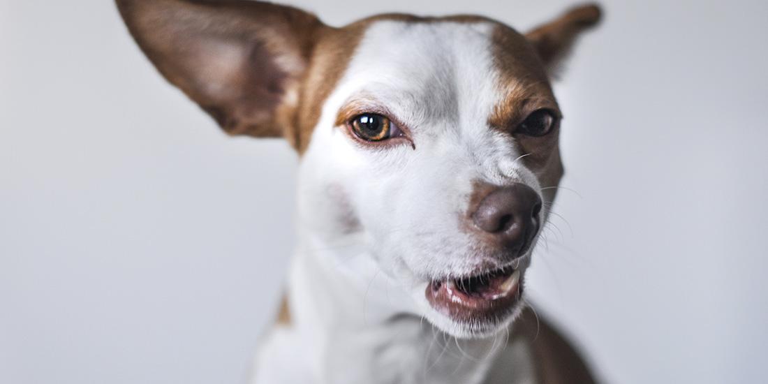 perro envenenado primeros auxilios