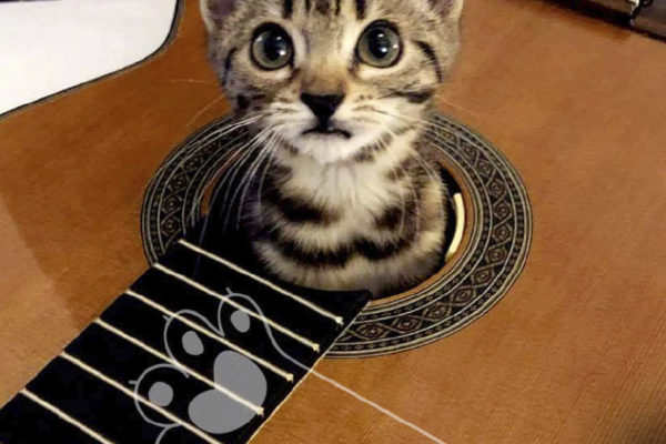 concierto para gatos