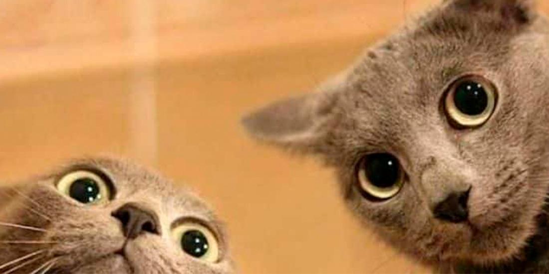 ¿cuántos colores pueden ver los gatos?