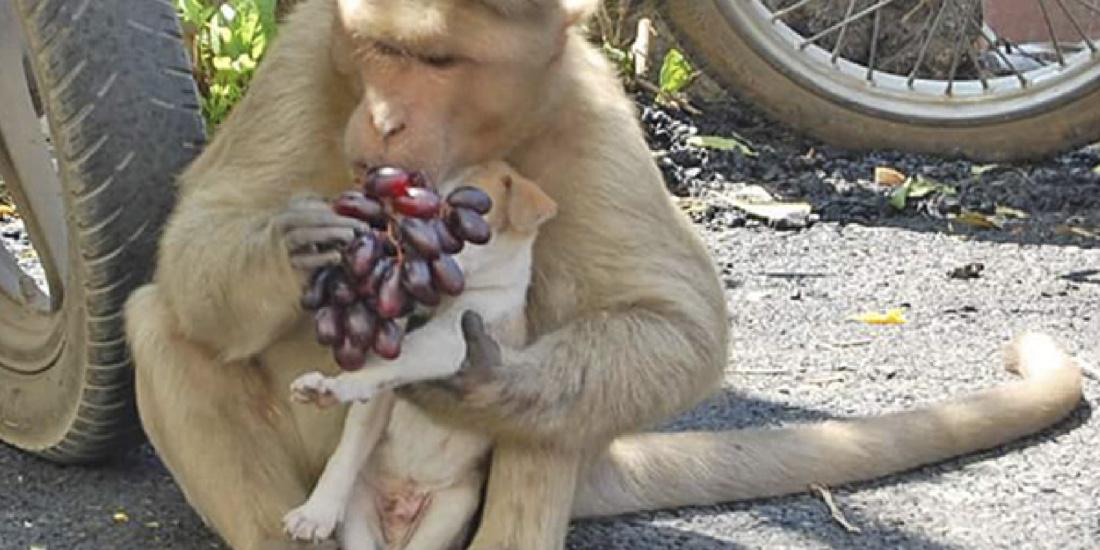 mono adopta cachorro