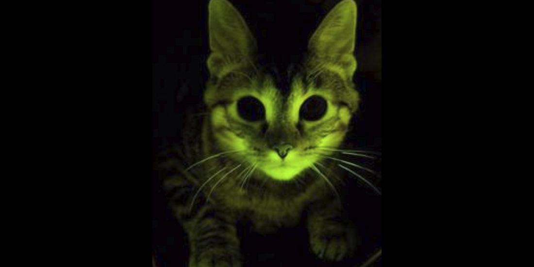 gatos brillan en la oscuridad