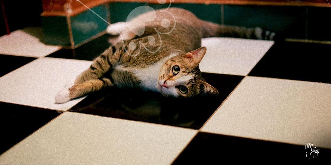 nombre de gatos