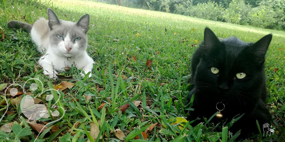 distintas formas de respirar de los gatos