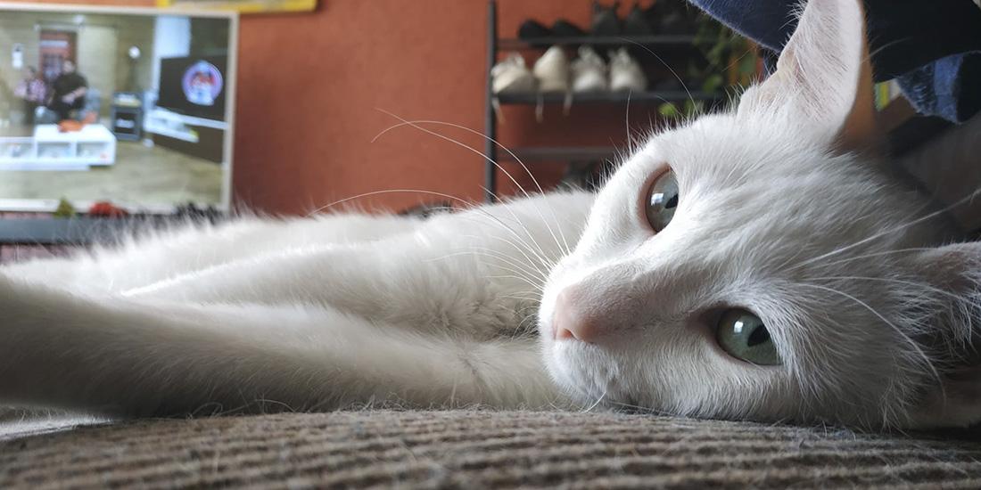 memoria de gatos