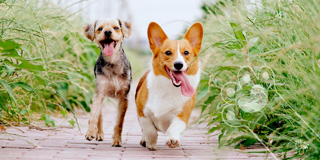 perros que cambian cuando crecen