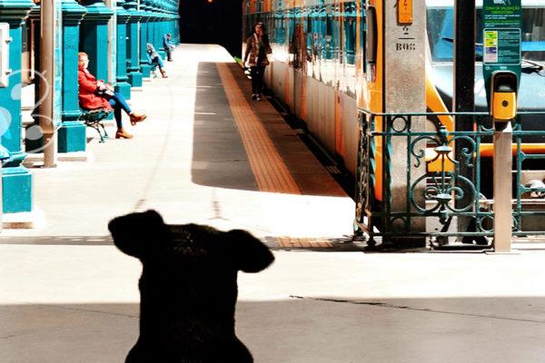 perros en el metro