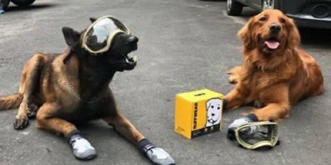 fallece perro rescatista