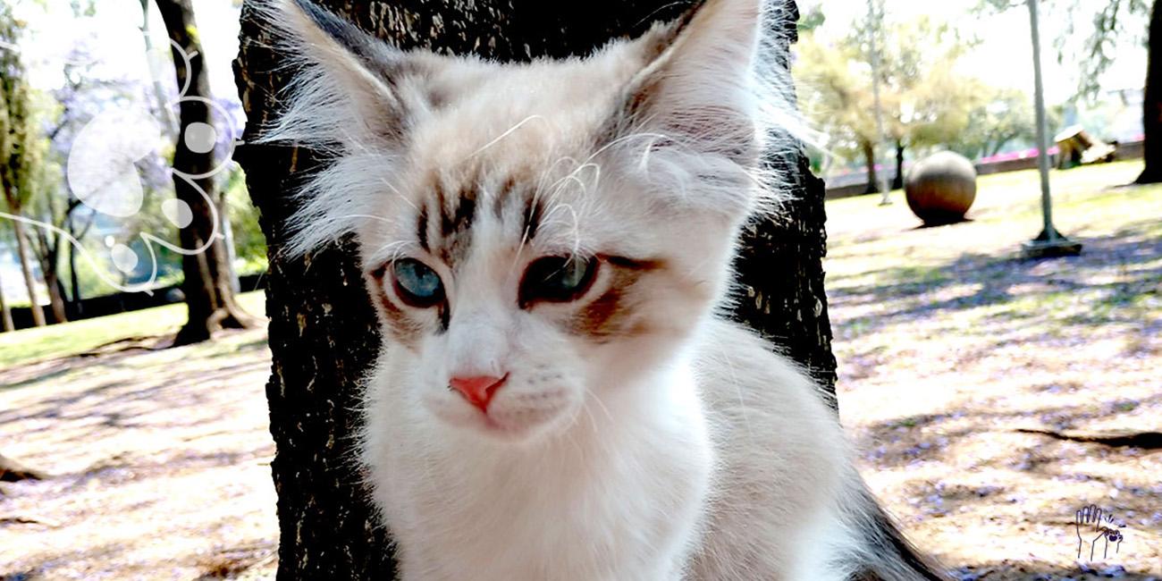 día del gato