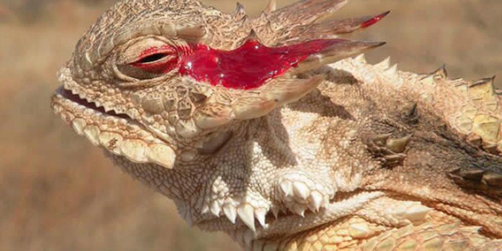 día mundial del lagarto