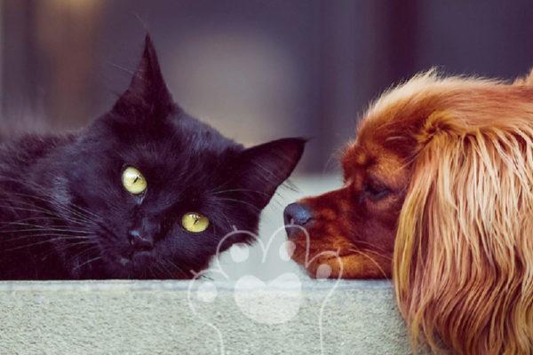 humanos y mascotas enterrados juntos