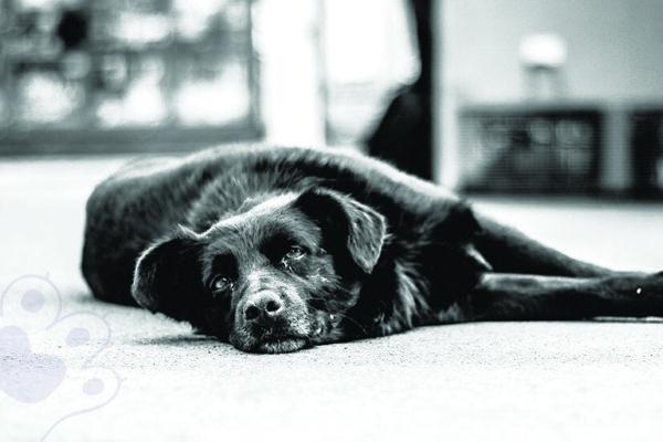 5 cosas que debes considerar si fallece tu mascota