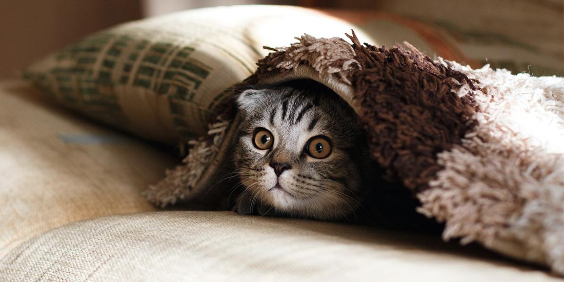 5 cosas que odian los gatos