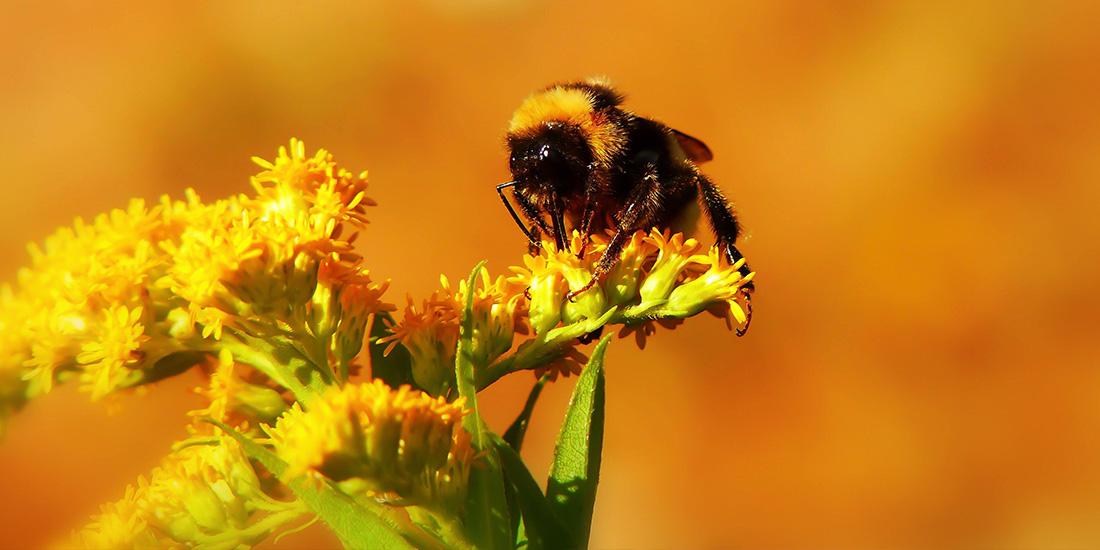 las abejas se están beneficiando del confinamiento por covid-19