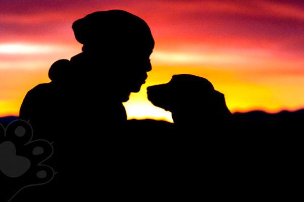 adiós a tu mejor amigo cómo superar la pérdida de tu mascota