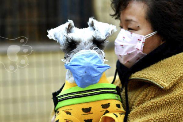 covid-19 no se contagia entre animales
