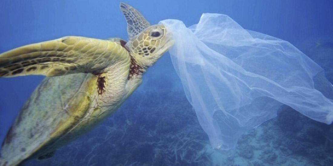 descubren una nueva especie conformada de plástico